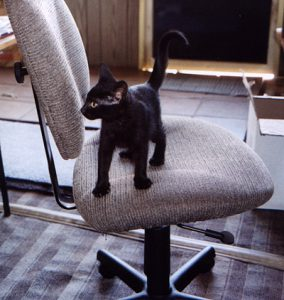 A black kitten is standing on a gray office chair, looking toward the left side of the photo.