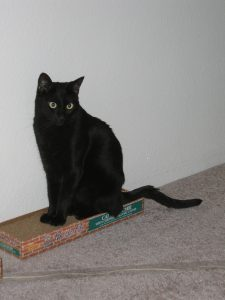 A black cat with wide yellow eyes is sitting on a cardboard scratcher, looking to the right of the photo